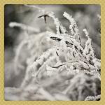 scraps_2010.12.07_002