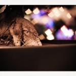 scraps_2011.12.13_003